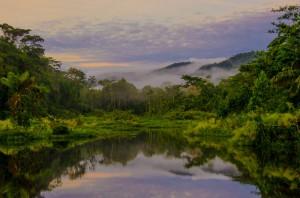 la selva amazonie parc manu