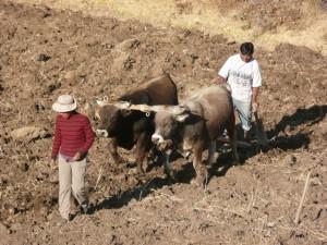 agriculteur-colca